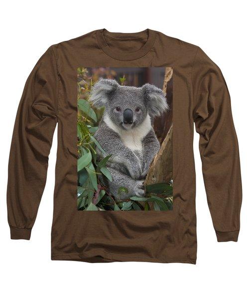Koala Phascolarctos Cinereus Long Sleeve T-Shirt by Zssd