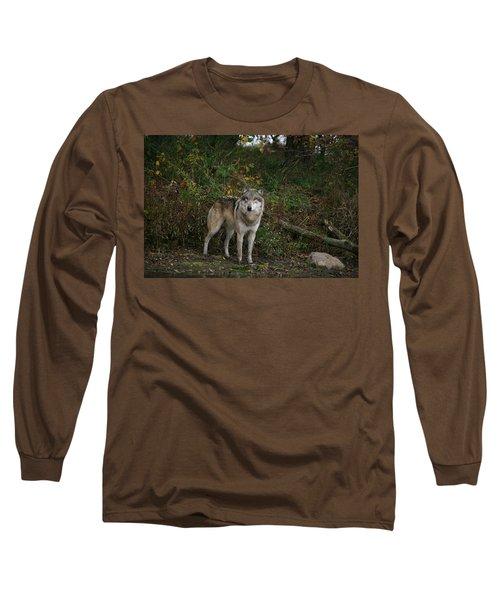 Lupine Pose Long Sleeve T-Shirt by Shari Jardina