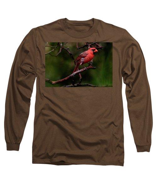 Male Northern Cardinal Long Sleeve T-Shirt