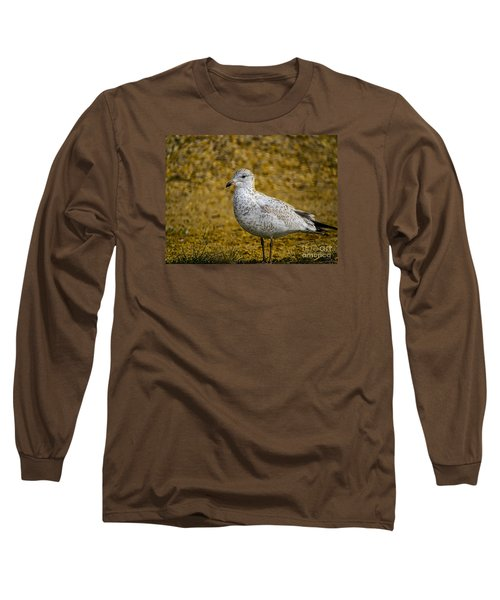 Long Sleeve T-Shirt featuring the photograph Mrs. Seagull by Melissa Messick