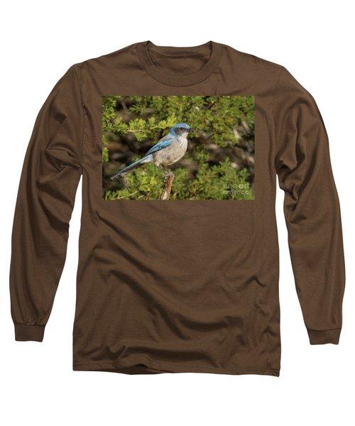 Perched Scrub Jay Long Sleeve T-Shirt