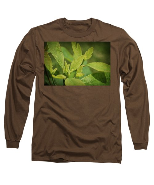 Sassafras Tree Long Sleeve T-Shirt