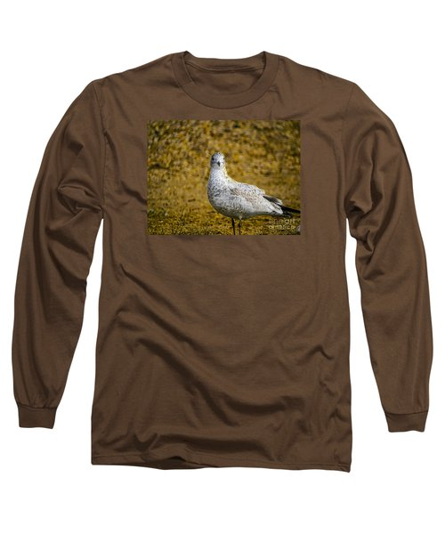 Long Sleeve T-Shirt featuring the photograph Seagull Family by Melissa Messick