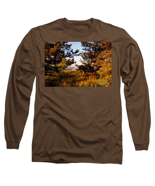 Through The Pine Grove Long Sleeve T-Shirt