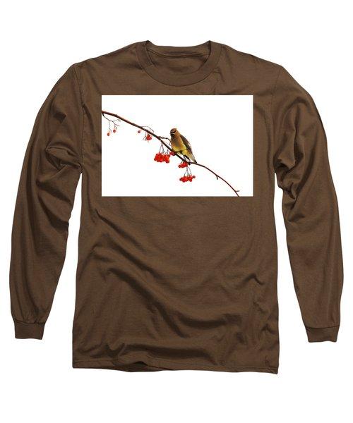 Winter Birds - Waxwing  Long Sleeve T-Shirt
