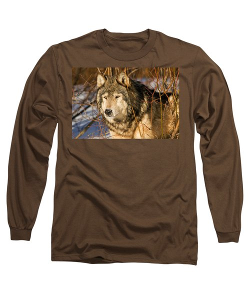 Wolf In Brush Long Sleeve T-Shirt