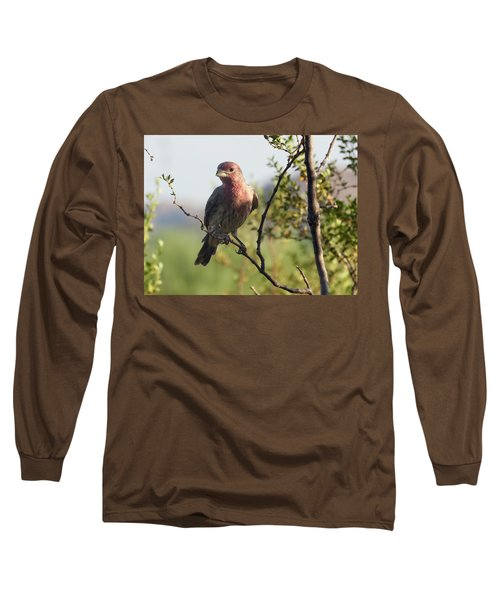 Young Male House Finch Long Sleeve T-Shirt
