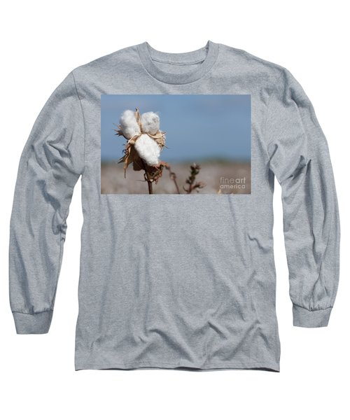 Cotton Bolls  Long Sleeve T-Shirt