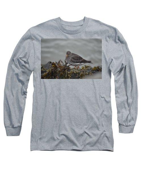 Purple Sandpiper Long Sleeve T-Shirt by James Petersen
