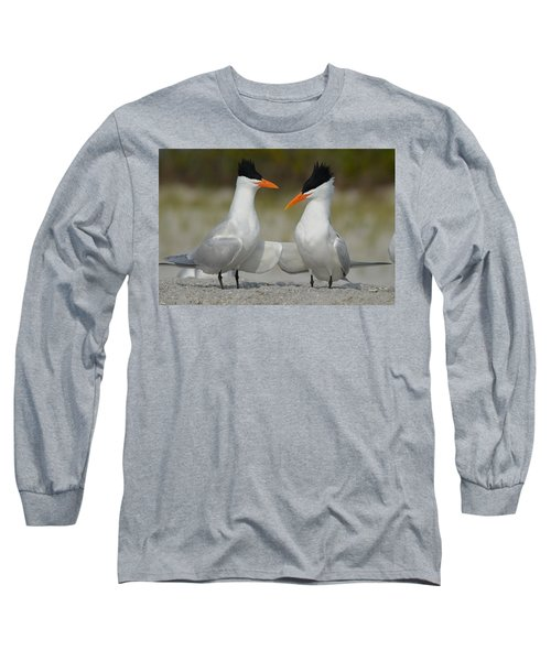 Royal Terns Long Sleeve T-Shirt by James Petersen