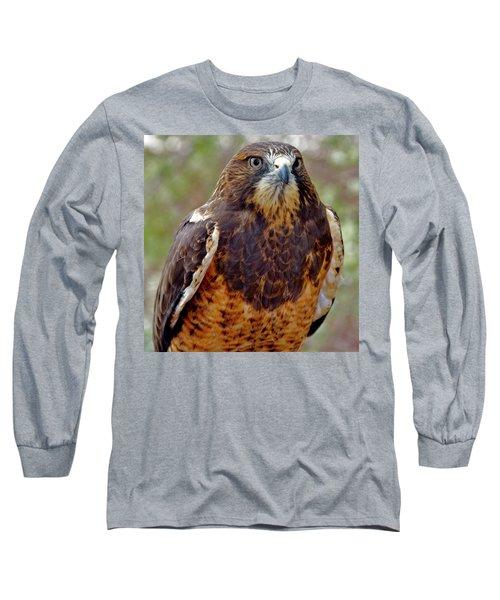 Swainson's Hawk Long Sleeve T-Shirt by Ed  Riche