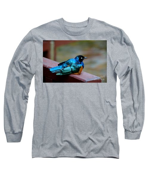 African Superb Starling Bird Rests On Wooden Beam Long Sleeve T-Shirt