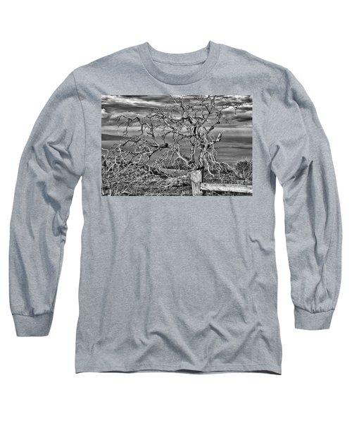 Bare Tree In Hana Long Sleeve T-Shirt by Loriannah Hespe