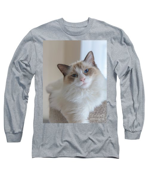 Long Sleeve T-Shirt featuring the photograph Blue-eyed Ragdoll Kitten by Peta Thames