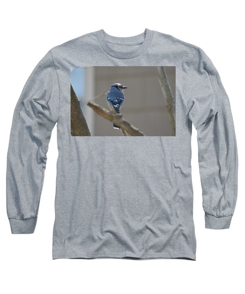 Blue Jay Long Sleeve T-Shirt by James Petersen