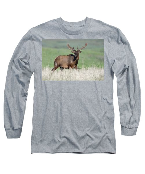 Long Sleeve T-Shirt featuring the photograph Bull Elk In Velvet by Jack Bell
