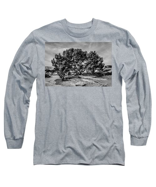 Bw Limber Pine Long Sleeve T-Shirt
