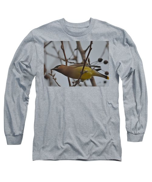 Long Sleeve T-Shirt featuring the photograph Cedar Waxwing Feasting In Foggy Cherry Tree by Jeff at JSJ Photography