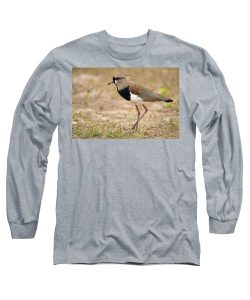 Close-up Of A Southern Lapwing Vanellus Long Sleeve T-Shirt by Panoramic Images