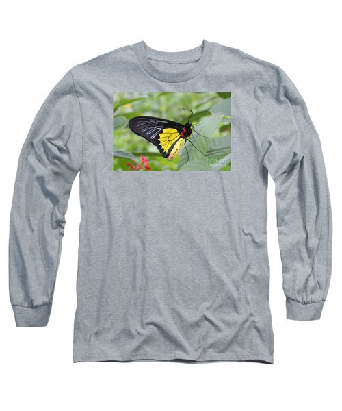 Long Sleeve T-Shirt featuring the photograph Common Birdwing Butterfly by Judy Whitton
