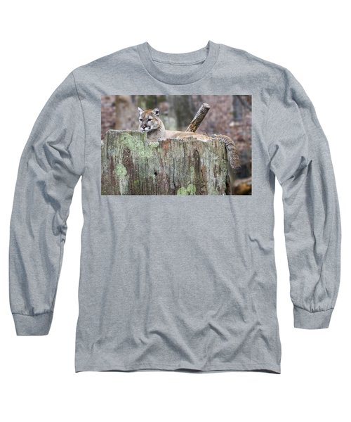 Cougar On A Stump Long Sleeve T-Shirt by Chris Flees
