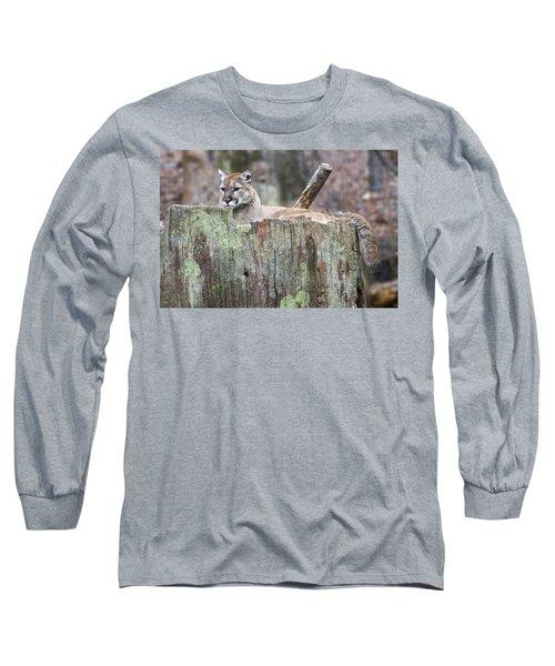 Cougar On A Stump Long Sleeve T-Shirt