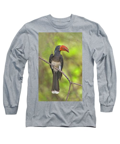 Crowned Hornbill Perching On A Branch Long Sleeve T-Shirt