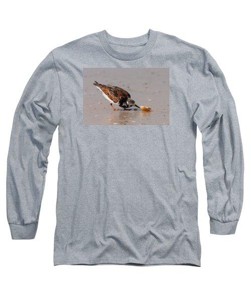 Curious Turnstone Long Sleeve T-Shirt by Paul Rebmann