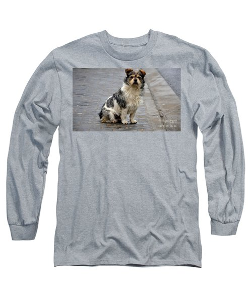 Cute Dog Sits On Pavement And Stares At Camera Long Sleeve T-Shirt by Imran Ahmed