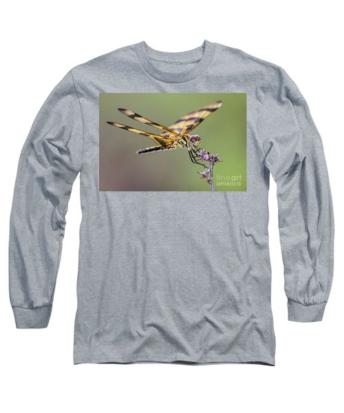 Long Sleeve T-Shirt featuring the photograph The Halloween Pennant Dragonfly by Olga Hamilton