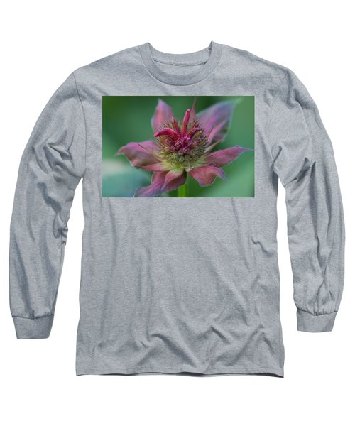 Early Spring Bee Balm Bud Long Sleeve T-Shirt