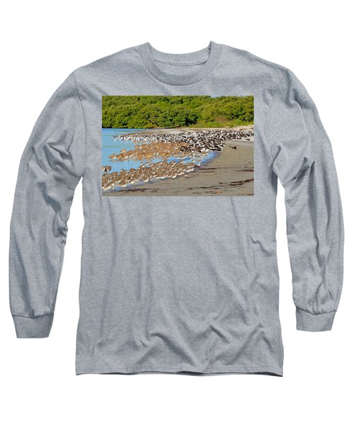 Long Sleeve T-Shirt featuring the photograph Four Species Of Birds At Roost On Tampa Bay Beach by Jeff at JSJ Photography