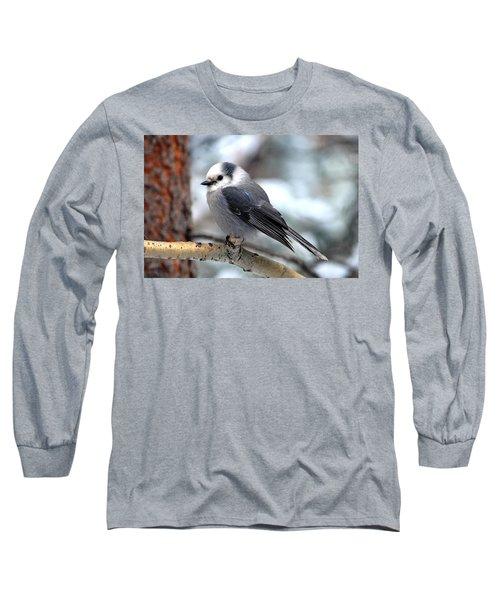 Gray Jay On Aspen Long Sleeve T-Shirt