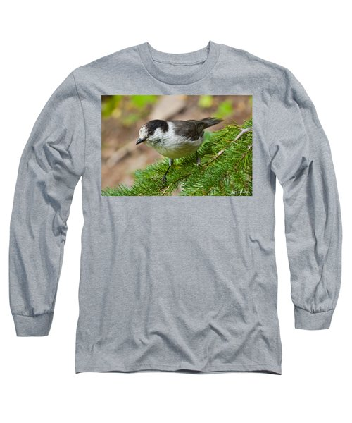 Gray Jay On Fir Tree Long Sleeve T-Shirt