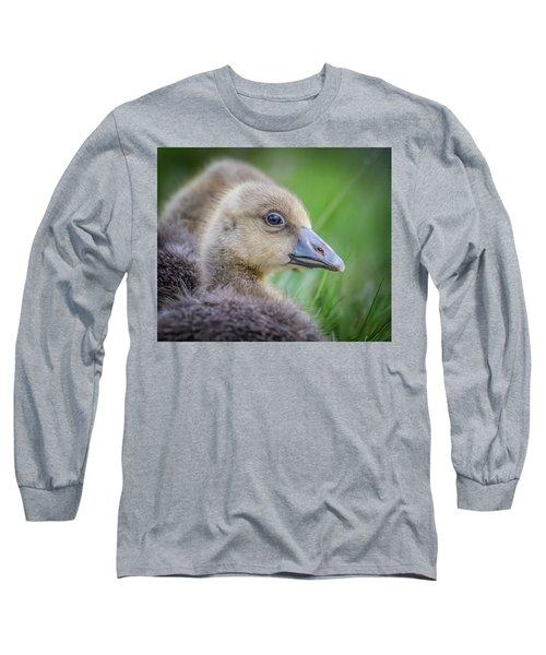 Greylag Goslings, Iceland Long Sleeve T-Shirt