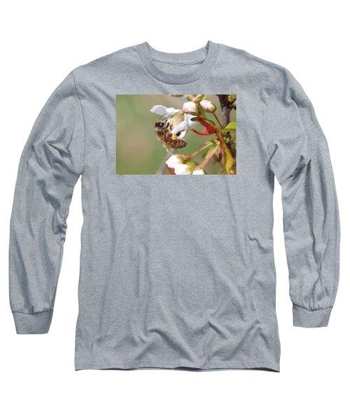 Honeybee On Cherry Blossom Long Sleeve T-Shirt