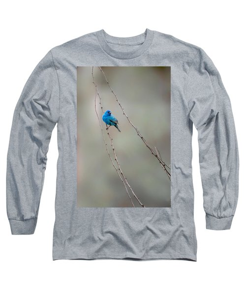 Indigo Bunting Long Sleeve T-Shirt by Bill Wakeley