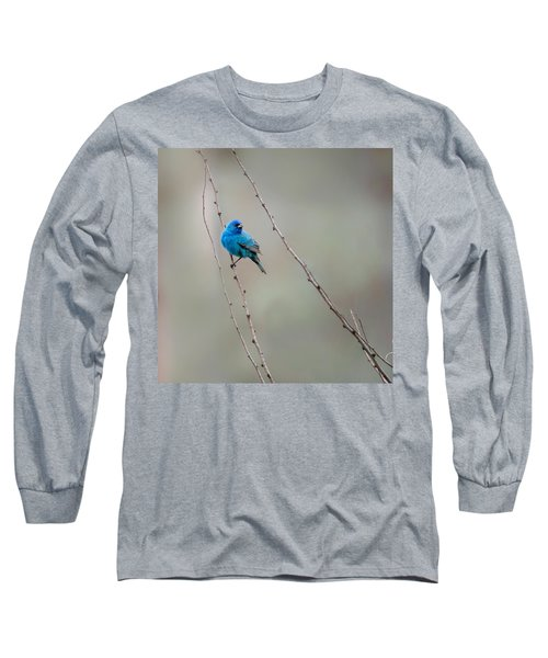 Indigo Bunting Square Long Sleeve T-Shirt by Bill Wakeley