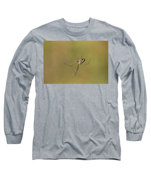 Orchard Spider Long Sleeve T-Shirt by Greg Allore