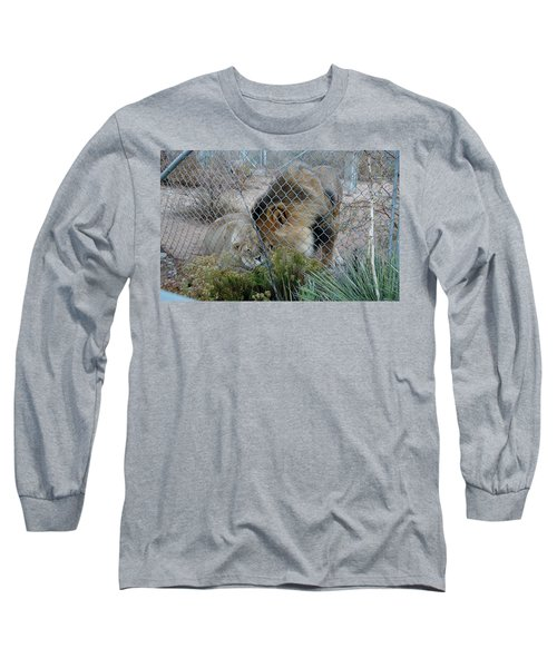 Out Of Africa Lions 4 Long Sleeve T-Shirt