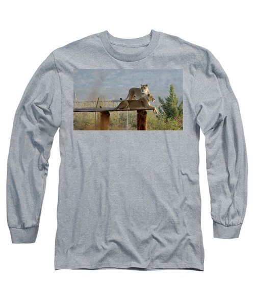 Out Of Africa Lions Long Sleeve T-Shirt