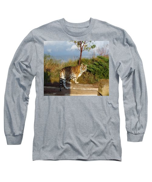 Out Of Africa  Tiger 1 Long Sleeve T-Shirt