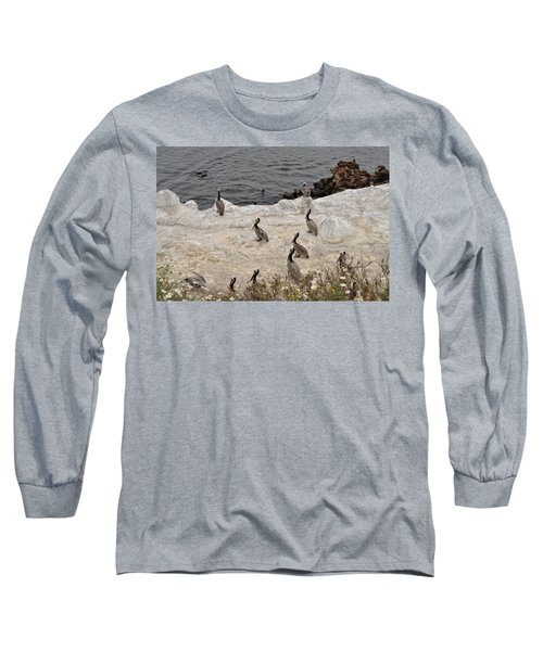 Pelicans Seals N Daisies  Long Sleeve T-Shirt