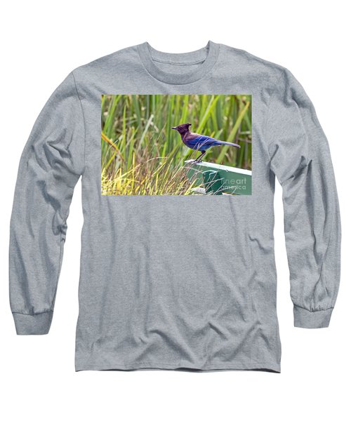 Long Sleeve T-Shirt featuring the photograph Perching Jay by Kate Brown