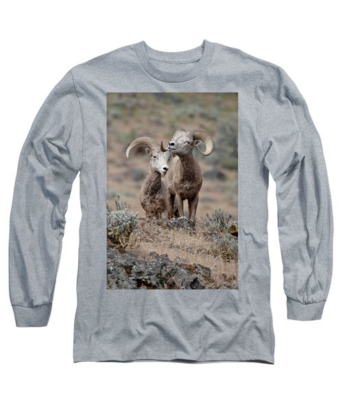 Playfull Rams Long Sleeve T-Shirt by Athena Mckinzie