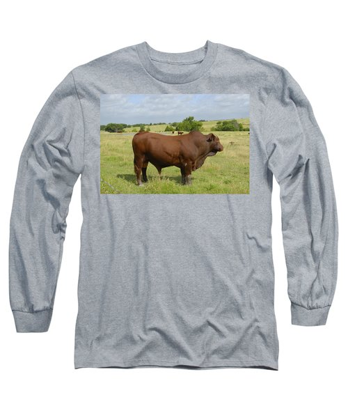 Red Angus Bull Long Sleeve T-Shirt by Charles Beeler