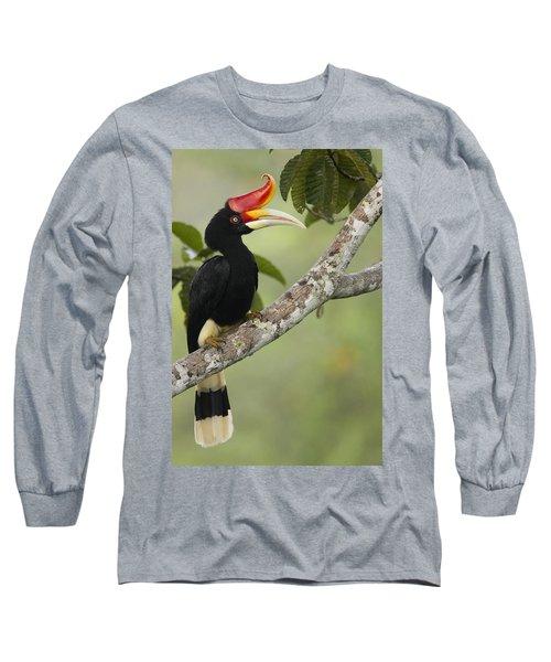 Rhinoceros Hornbill Female Sepilok Long Sleeve T-Shirt