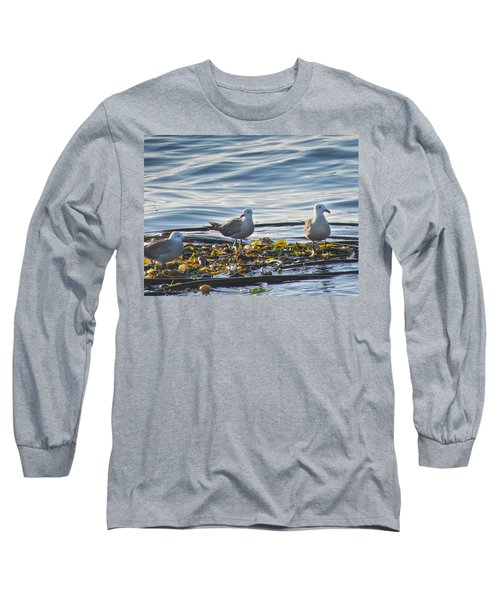 Seagulls In Victoria Bc Long Sleeve T-Shirt
