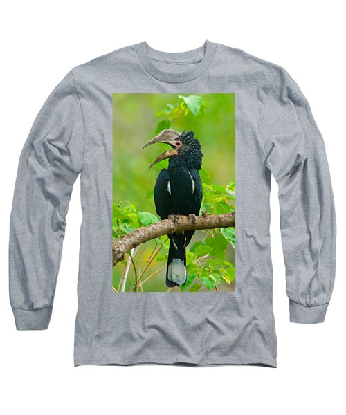 Silvery-cheeked Hornbill Perching Long Sleeve T-Shirt by Panoramic Images