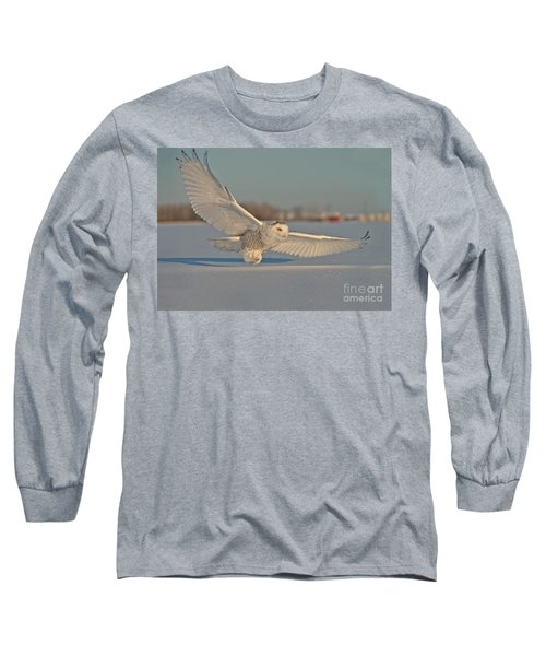 Snowy Owl Pictures 7 Long Sleeve T-Shirt